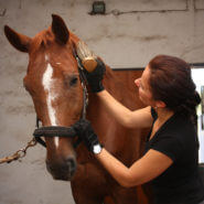 Woman brushing brown horse